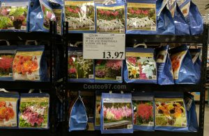 Spring Assortment Bulbs and Perennials - 125199