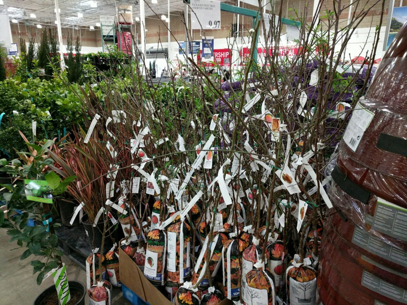 Fruit Trees Semi Dwarf Assorted Varieties Costco97 Com