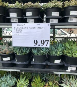 Succulent Assortment