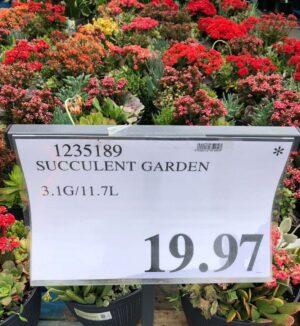 Succulent Garden - 1235189
