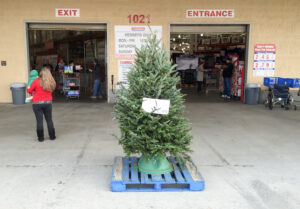 Costco Real Fresh-Cut Christmas Tree