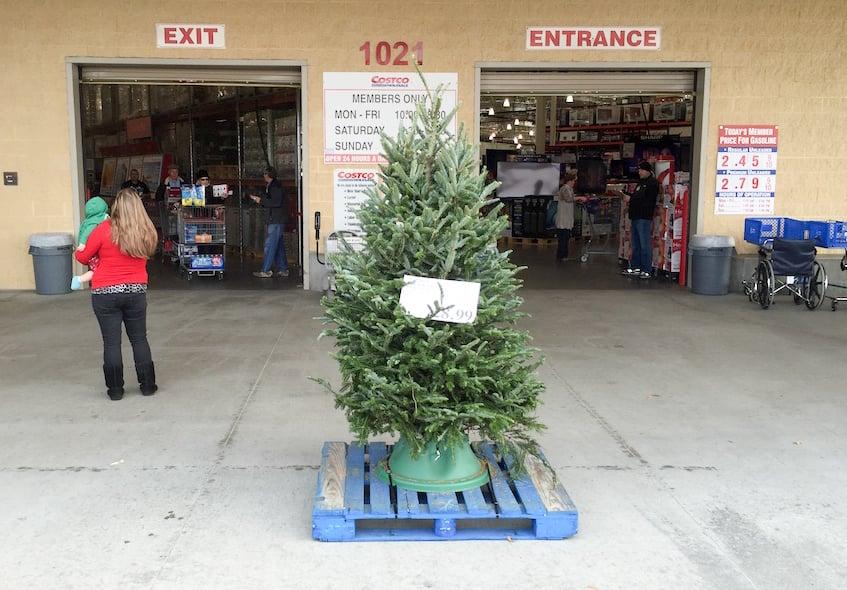 Costco Fresh Cut Christmas Tree 2020 Fresh Christmas Trees at Costco | Costco97.com