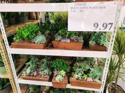 SucculentWoodBox-1358438